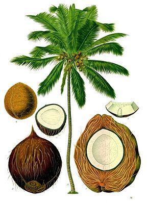 Loulougourmet Sucre De Fleur De Coco