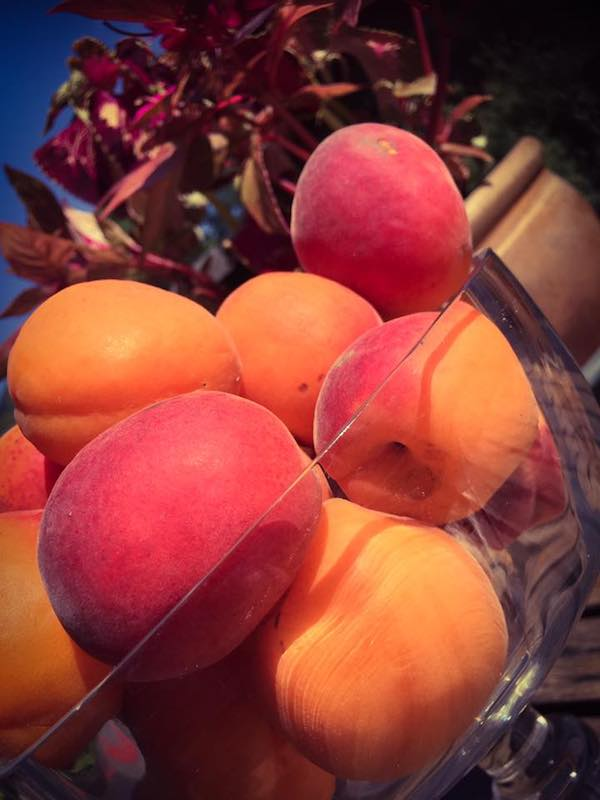 Je vous le dis avec certitude, c'est l'abricot le fruit défendu, pas la pomme.