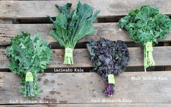 Mais qui est «Kale»?
